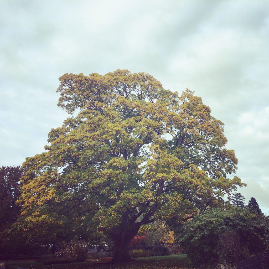 Gri de noiembrie si ganduri
