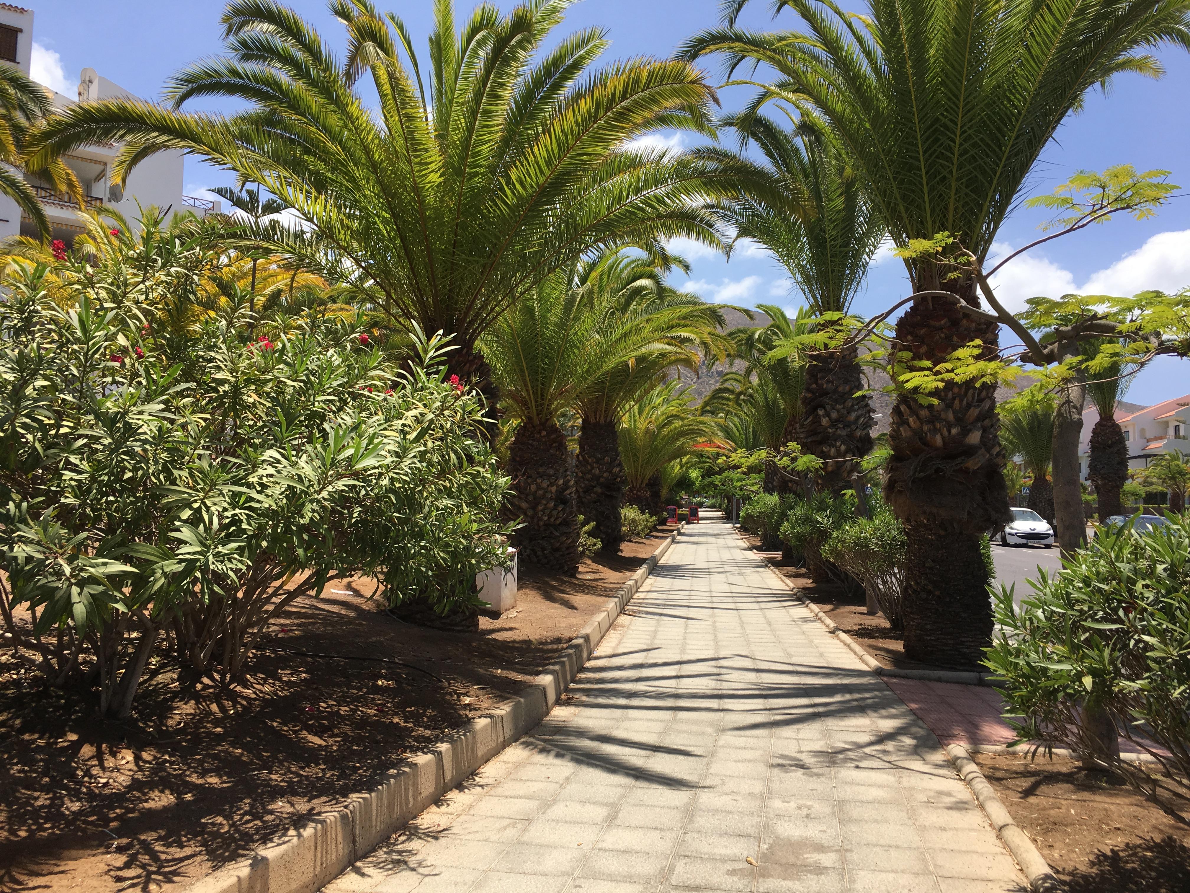 Calatorie in Tenerife